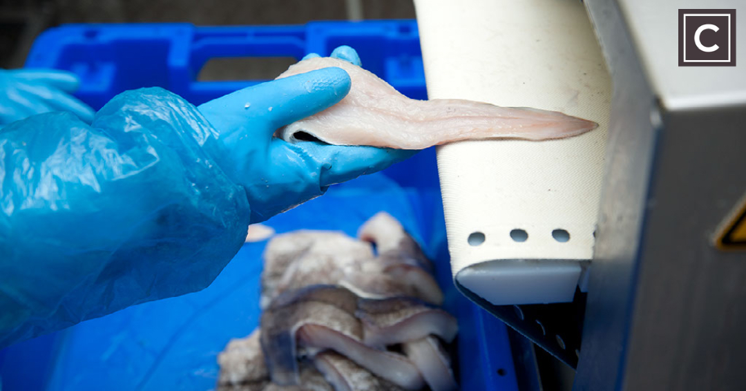HOW HADDOCK HAS COME TO BE IN SHORT SUPPLY